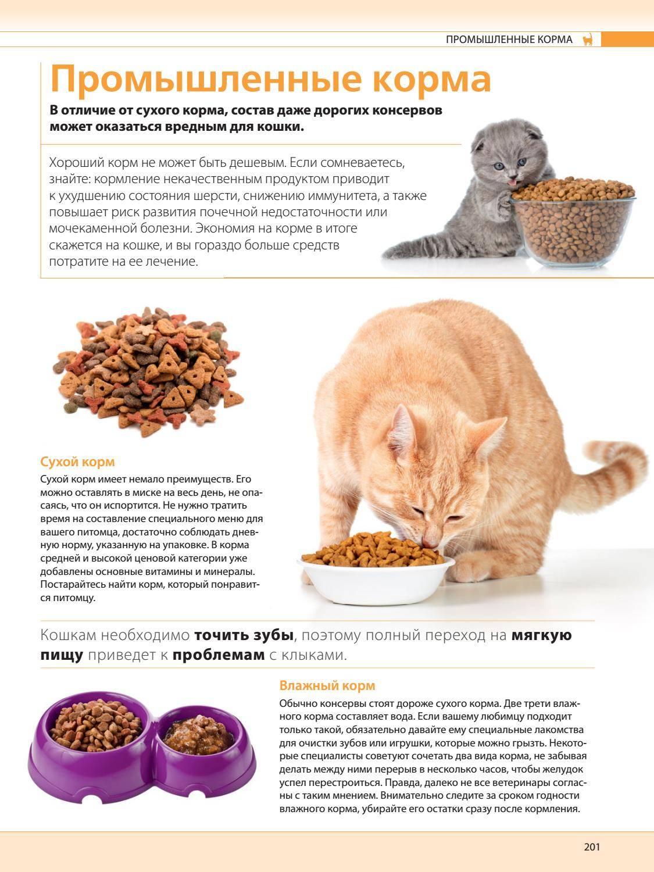 Как часто кормить кошку — сколько раз в день