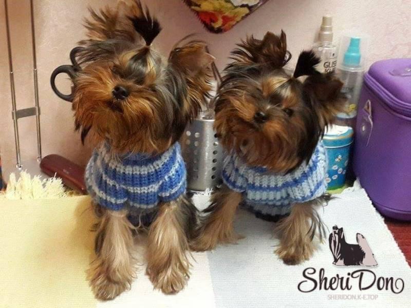 Роды у собаки в домашних условиях: признаки начала и процесс