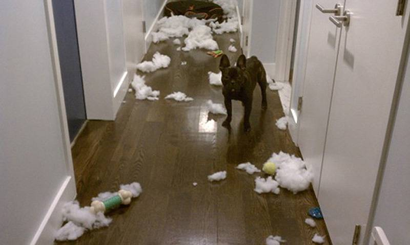 Зверушки не игрушки: как безответственность хозяев убивает питомцев