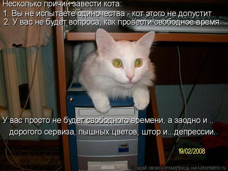 Как подружить кошек ? при появлении нового питомца в доме: алгоритмы поведения, возможные реакции, метод сближения конфликтных животных