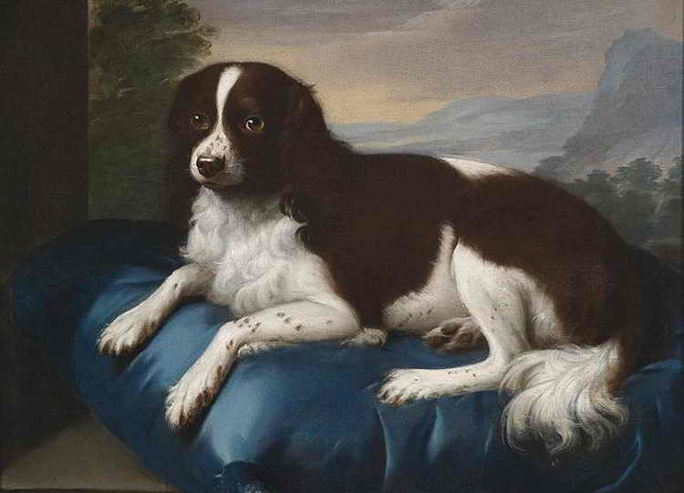 Собаки » породы » английский спрингер-спаниель