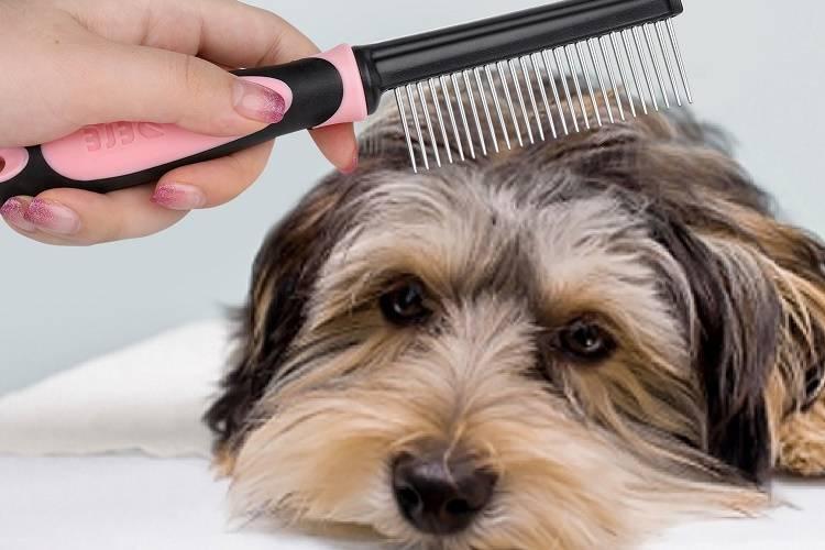 Классификация собак по типу их шёрстного покрова