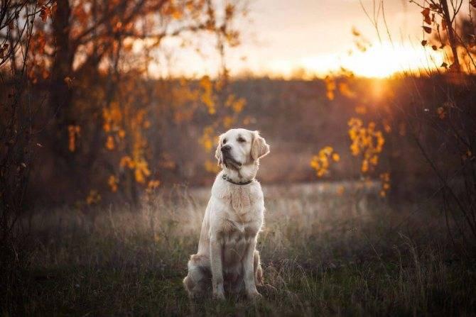 Что делать если собака убегает на прогулке: 6 простых правил