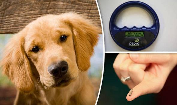Удаление чипа у собаки. всё о чипировании собак: что должен знать хозяин