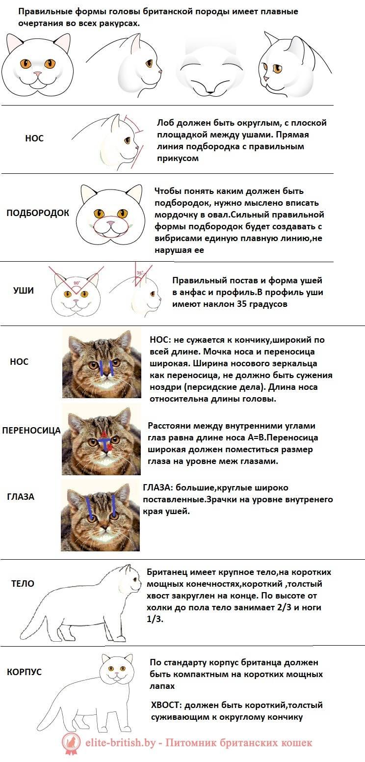 Как определить пол котенка: основные методики, народные приметы