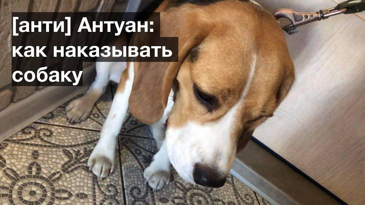 Можно ли наказывать собаку? секрет послушания