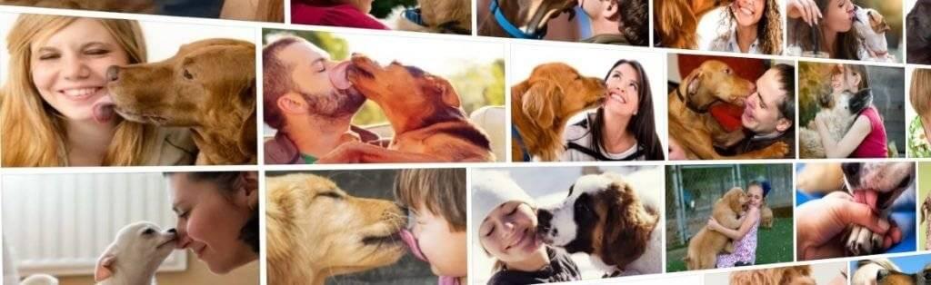 Почему собака лижет лицо человека и насколько это безопасно для его здоровья - досуг - животные на joinfo.ua
