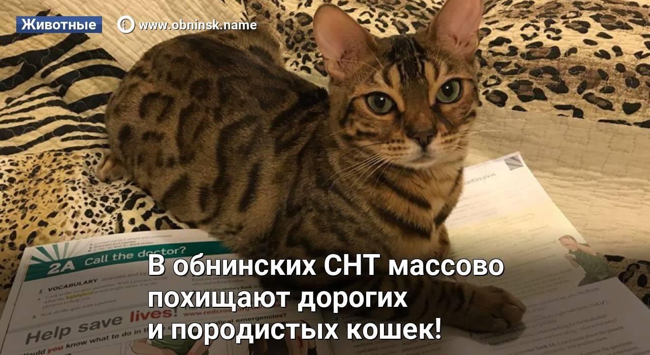 8 вечных котят: самые маленькие породы кошек - gafki.ru