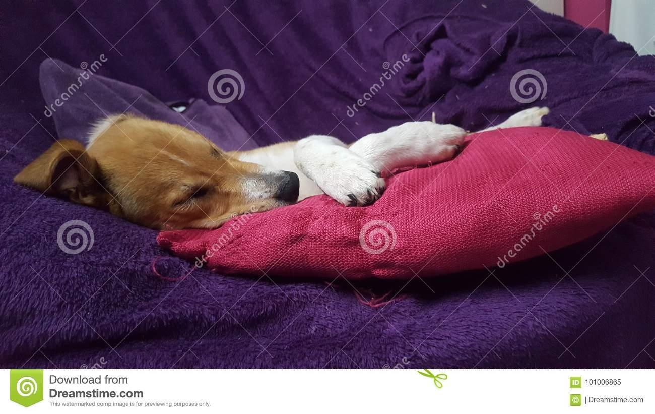 Щенок не спит ночью. что делать? | dogkind.ru