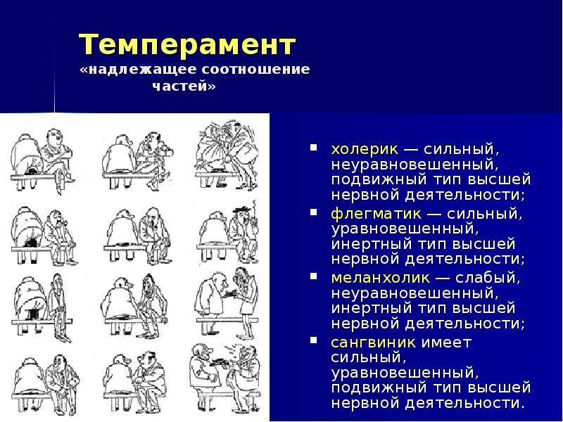 Бульмастиф. описание, цена и уход за бульмастифом   животный мир