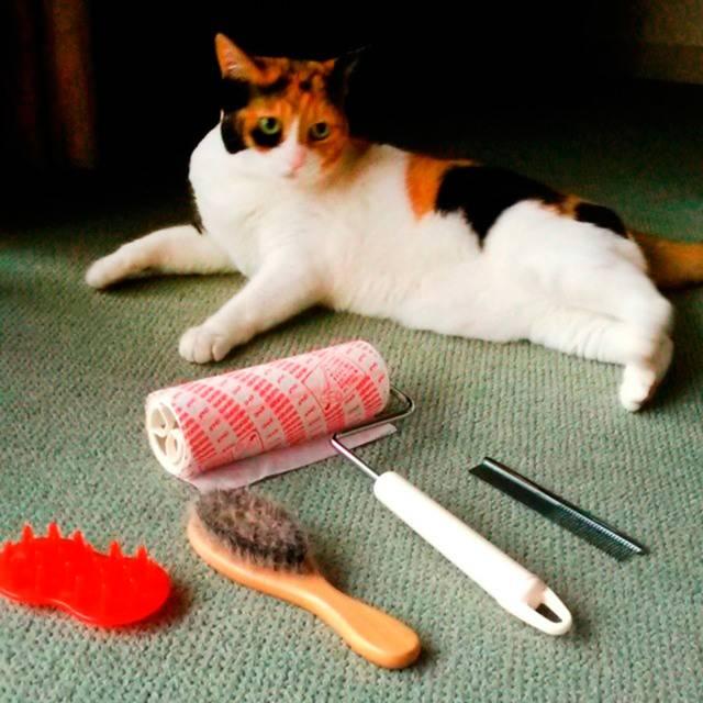 Колтуны у кошки и котов: причины появления и как их убрать?