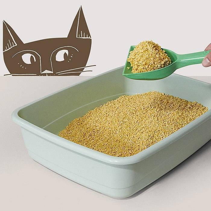 Котенок ест наполнитель для туалета: что делать