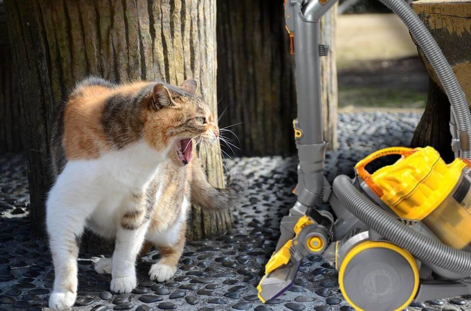 Топ-10 вещей, которые ненавидит ваша кошка