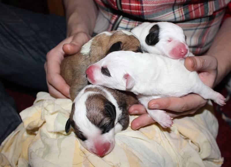 Когда у щенков открываются глаза и какие при этом возможны проблемы