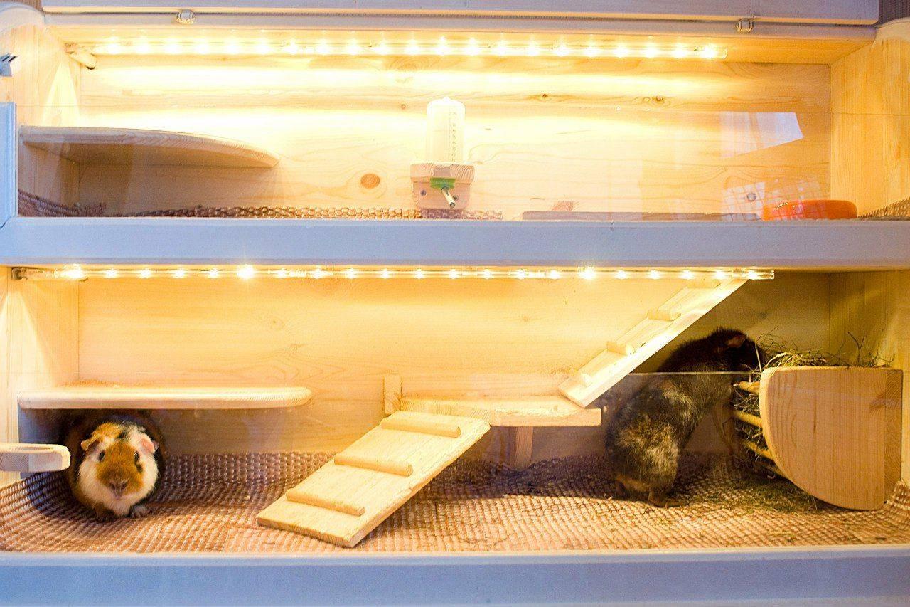Клетка для морской свинки своими руками (36 фото): как правильно ее сделать? как обустроить самодельную клетку?