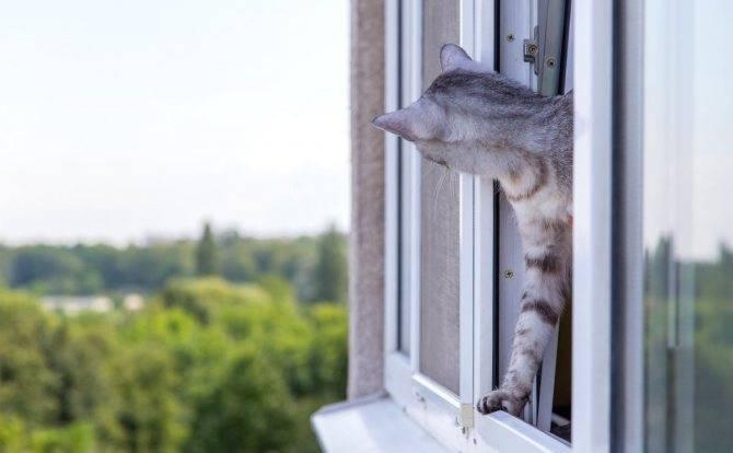 К чему умывается кошка — значение приметы