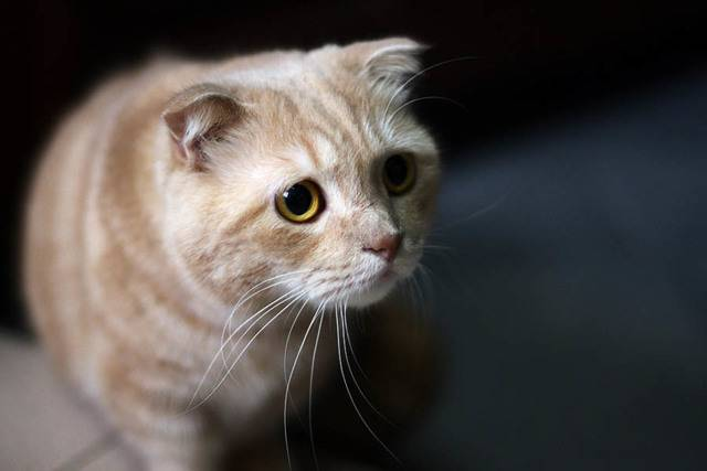 Гастрит у кошек – симптомы и лечение