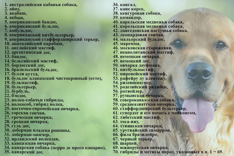 Глаза и зрение собаки: особенности и строение   все о собаках