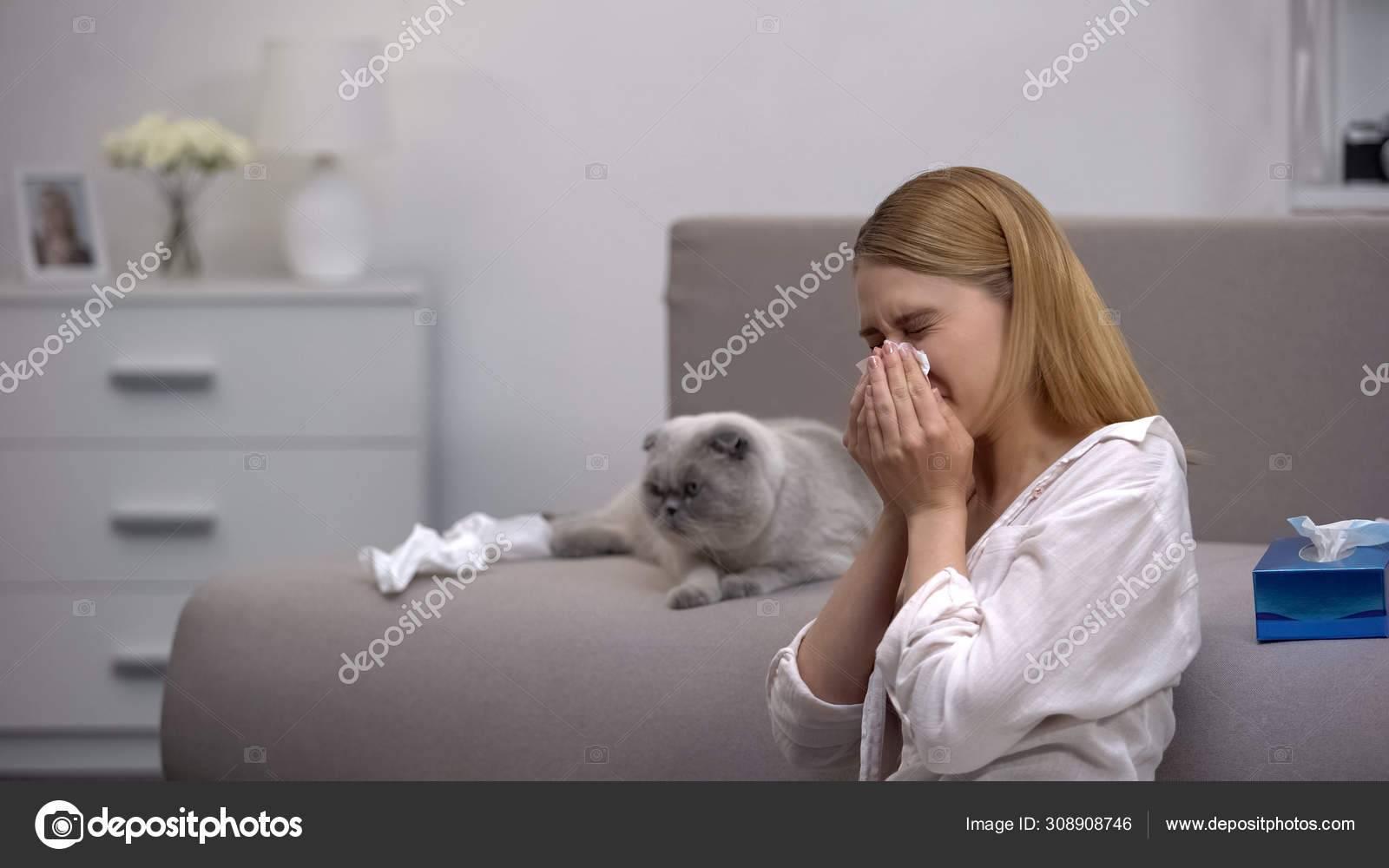 Аллергия на кошек:  симптомы и лечение детей и взрослых