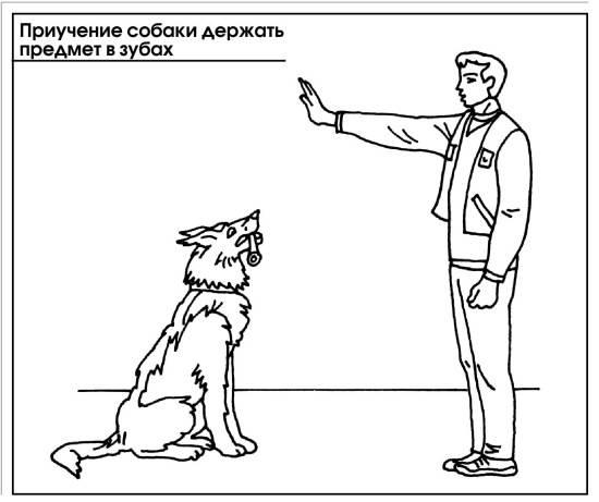 Как научить собаку приносить тапочки
