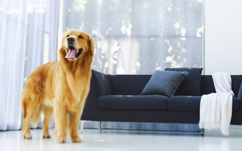 Собаки средних размеров для квартиры: лучшие породы и правила содержания