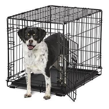 Правила содержания собак в квартире