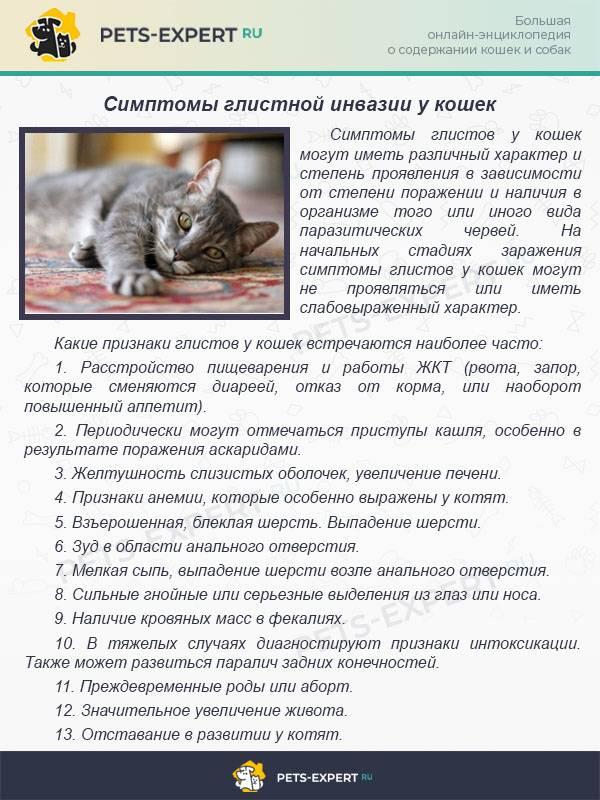 Гастрит у кошки: симптомы, лечение и профилактика