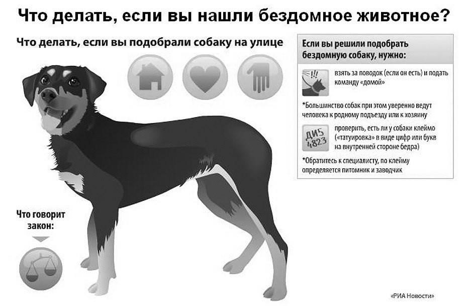 Как привязать к себе щенка или взрослую собаку: порядок приручения