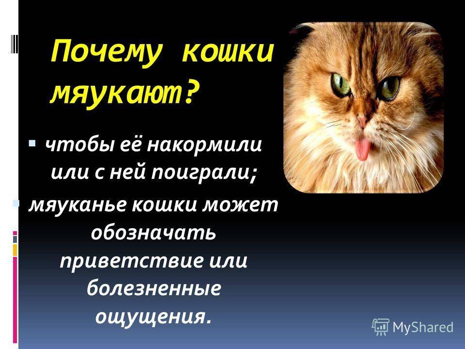 Почему кошки мяукают и что с этим делать?