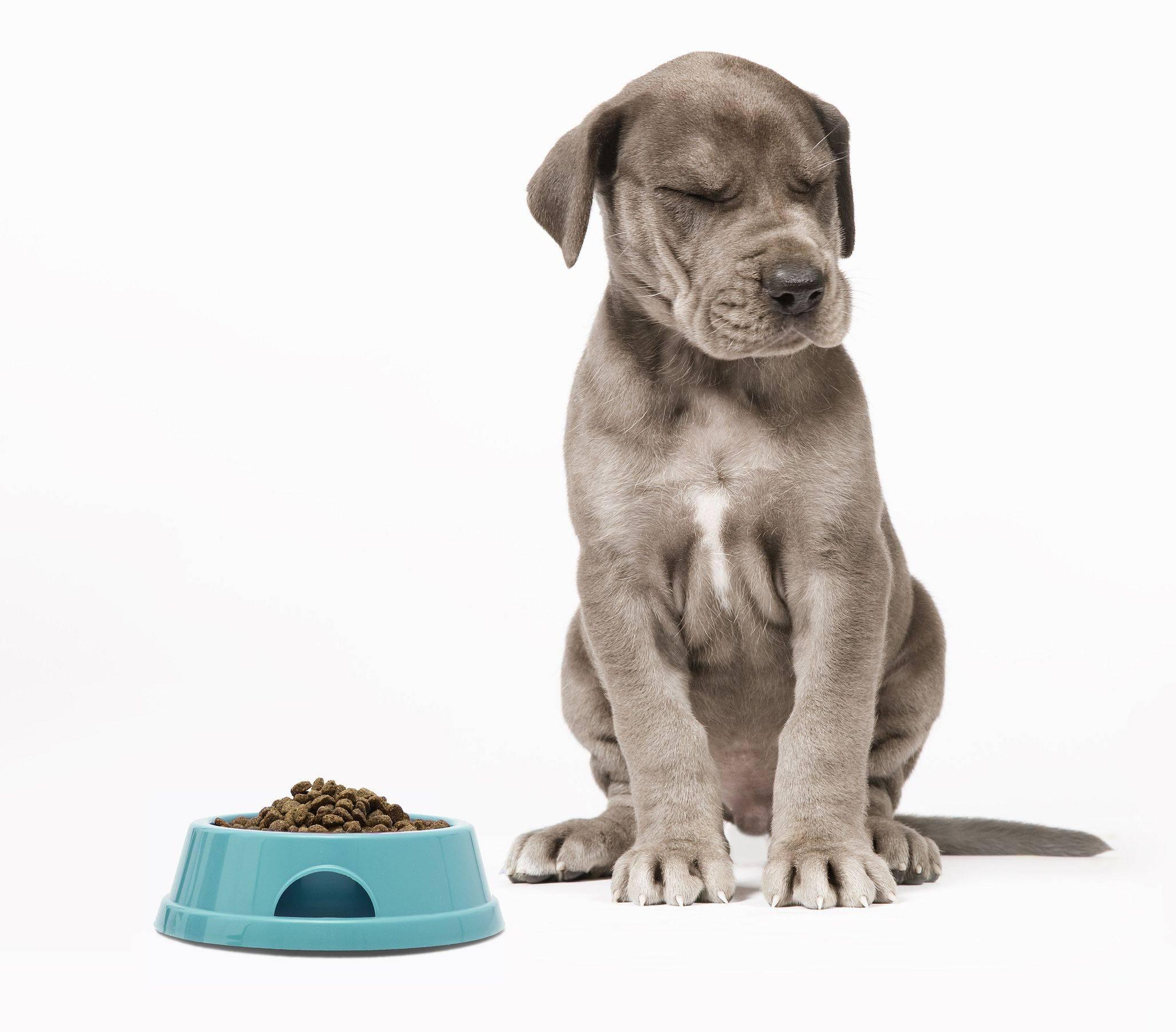 Собака трясётся и ничего не ест, что делать, если дрожит и не кушает, причины, почему не пьёт