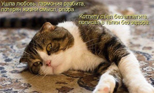 Признаки того, что ваша кошка тайно злится на вас