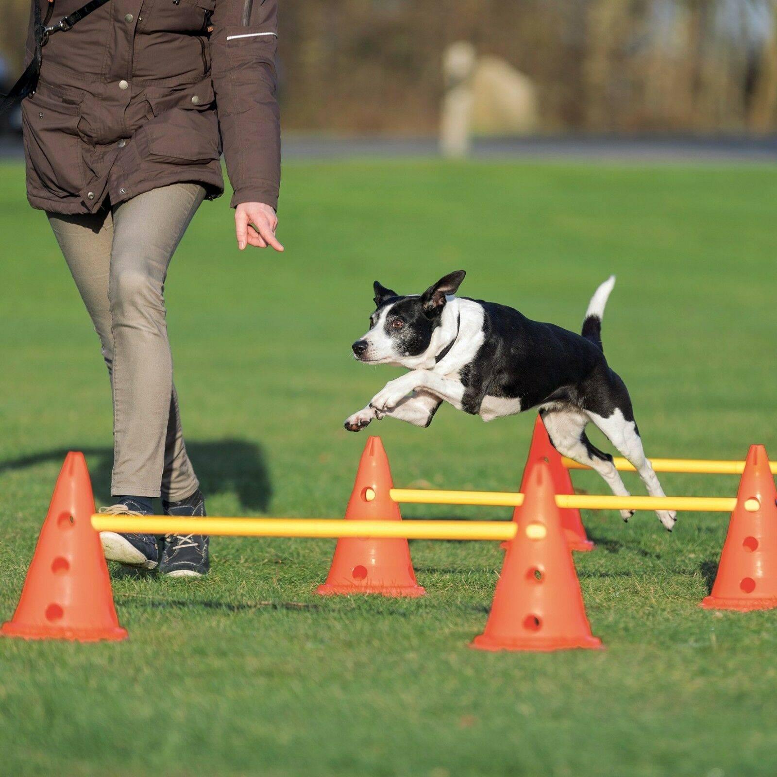 Аджилити для собак что это - спорт для собак: правила, соревнования и видео