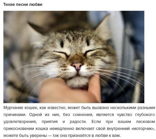 Как и почему кошки мурлыкают
