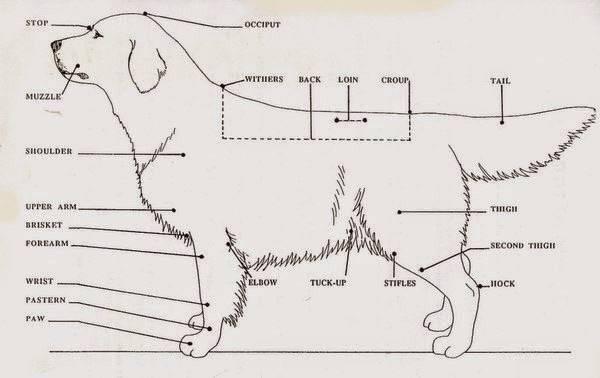 Кошачий выключатель: что такое холка и зачем она нужна