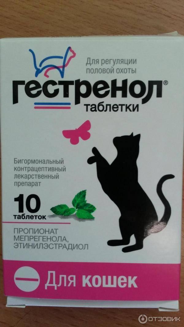 10 вещей, которые могут отравить собаку - petstime.ru