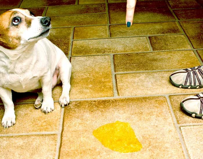 Почему собаки слипаются при спаривании