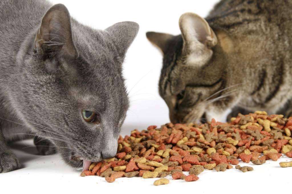 Самый качественный корм для кошек: таблица лучших кормов по отзывам ветеринаров. топ бюджетных кормов для котов хорошего качества