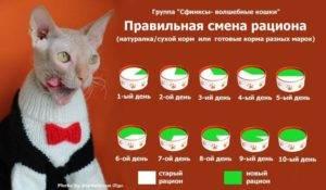 Как выкормить новорожденного котенка без кошки: ? основные принципы