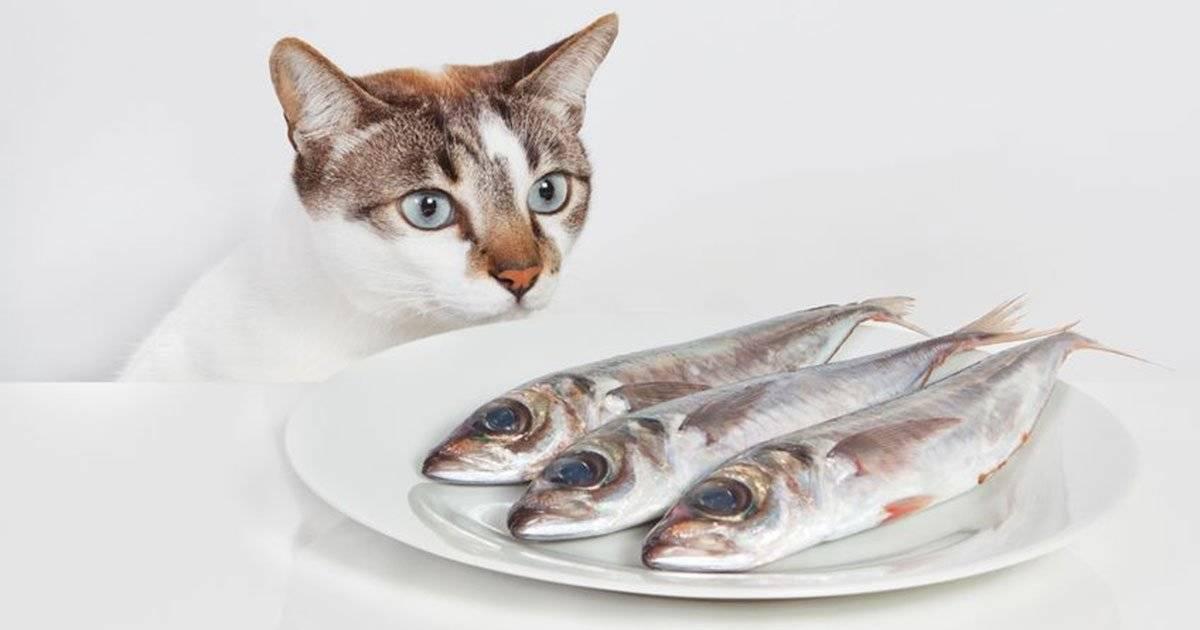 Можно ли кормить кота консервами и как это правильно делать? | кот и кошка