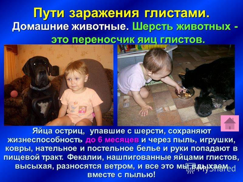 Можно ли заразиться аскаридами от собаки человеку