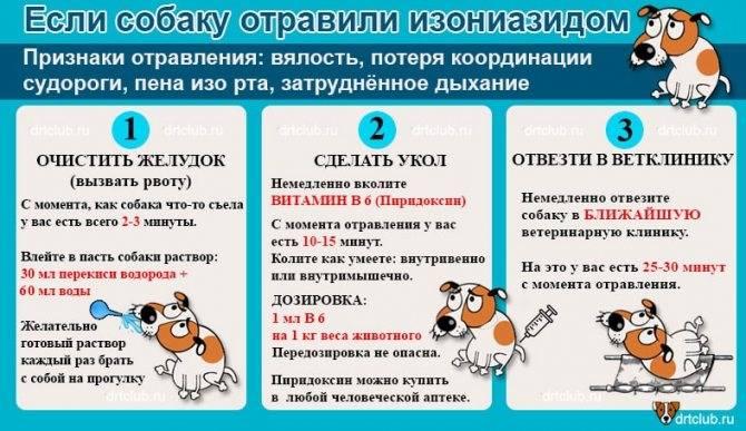 Отравление у собаки: начальные проявления и первая помощь