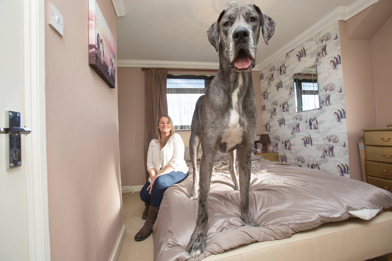 Какие лучшие породы собак для квартиры? топ 5