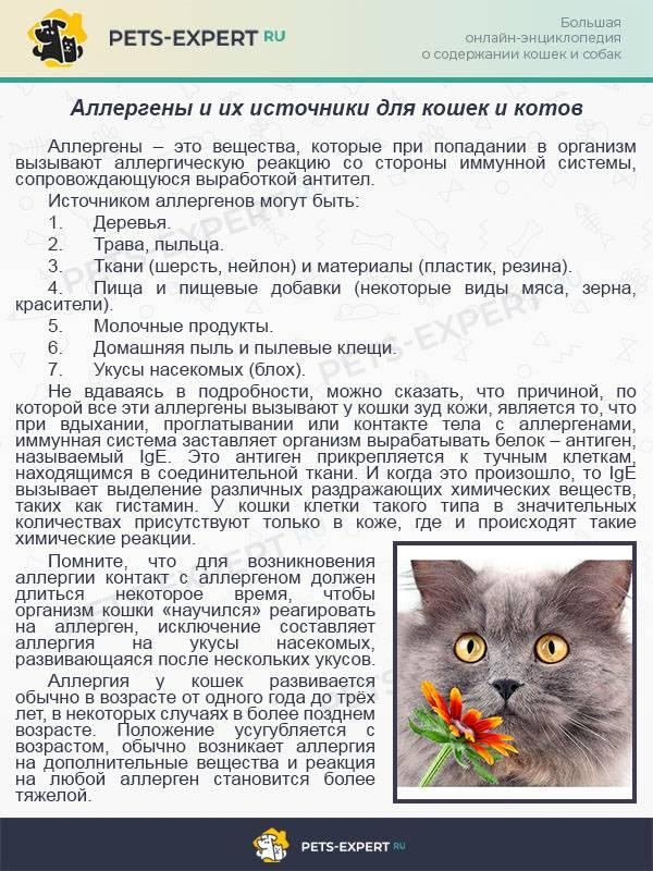 6 способов снизить аллергическую реакцию на кошек