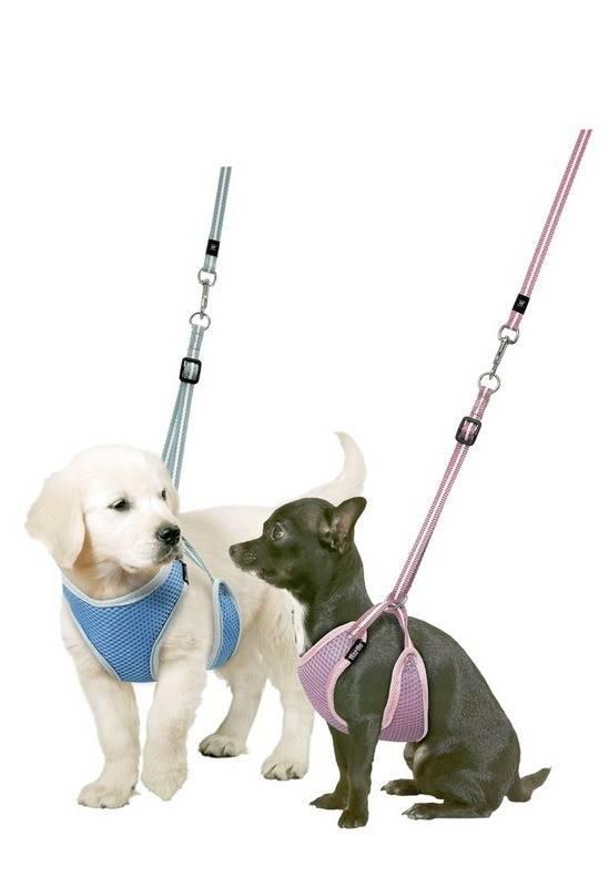 10 пород собак для ленивых хозяев - список беспроблемных пород