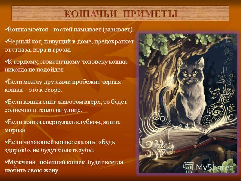 Чужая кошка пришла в дом: приметы и суеверия