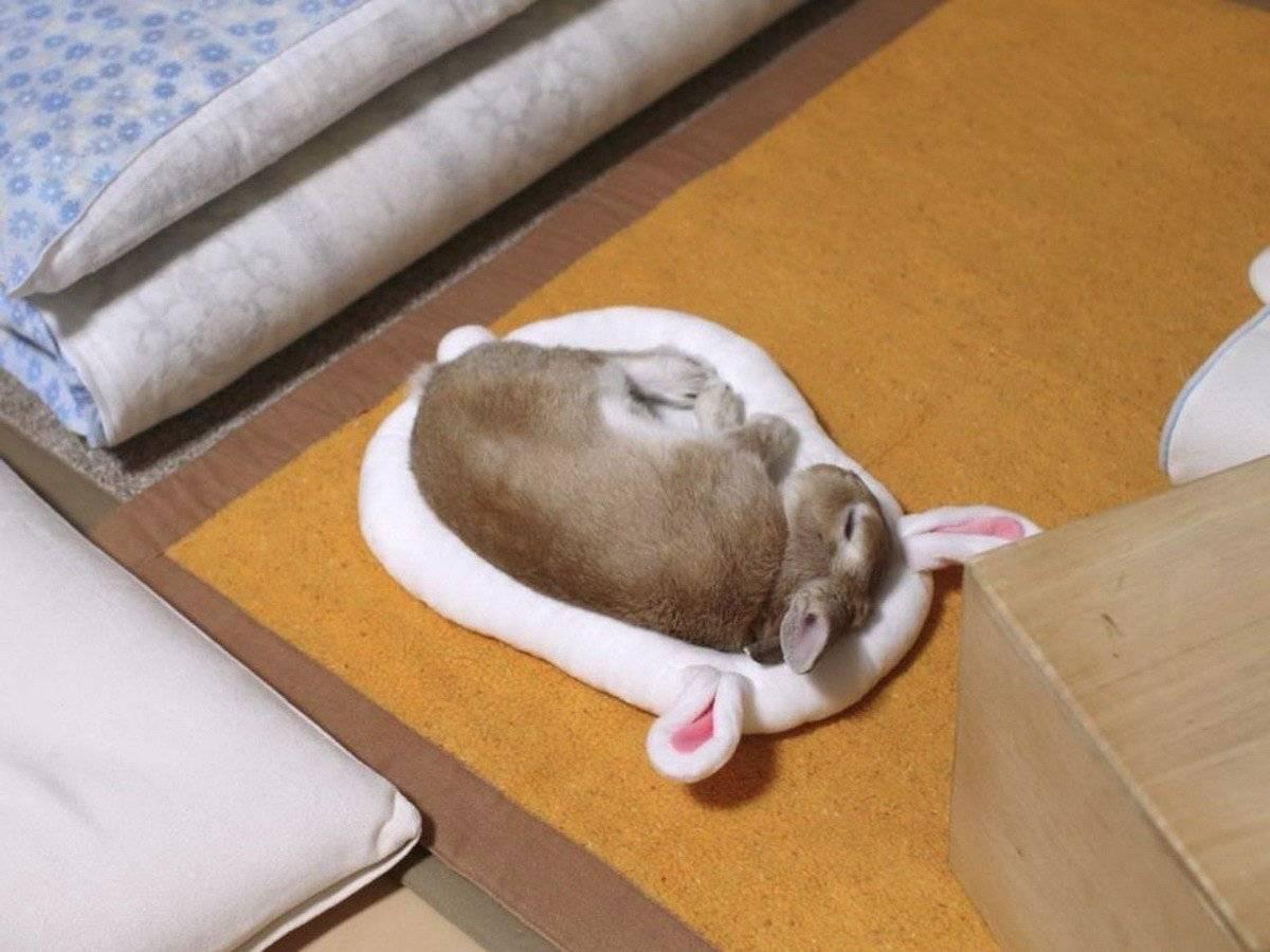 Как спят кролики: сколько и как часто, особенности сна - всёпродачу