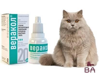Ковертал для кошек: рекомендации по применению