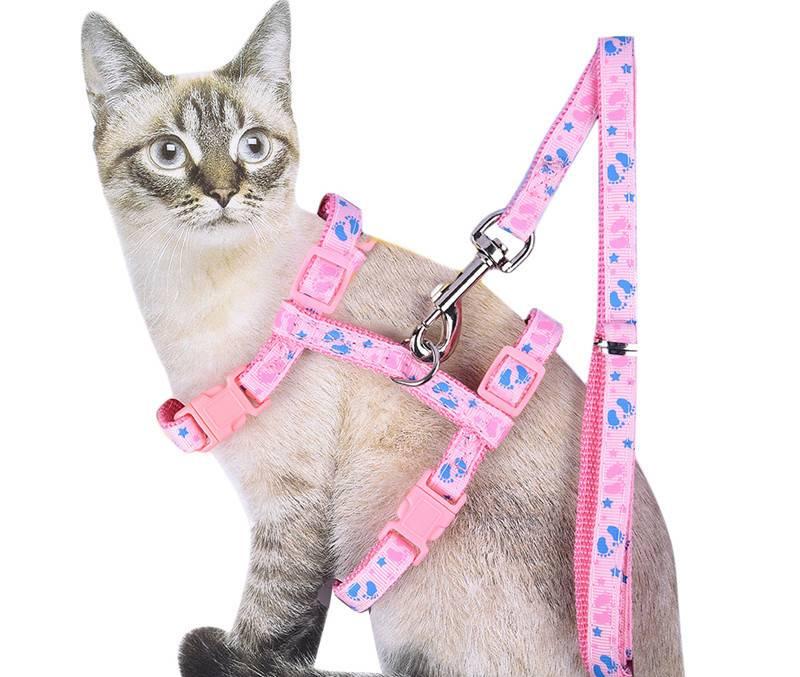 Шлейка для кошки: основные виды и варианты изготовления своими руками