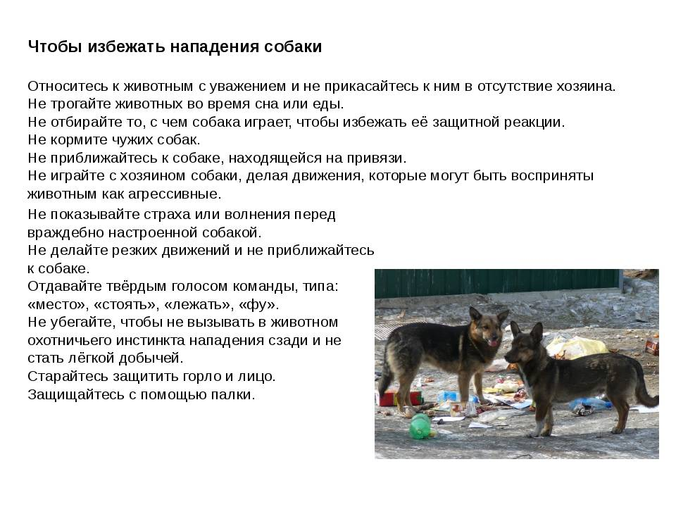 Если укусила собака: что делать, до крови, лечебные процедуры