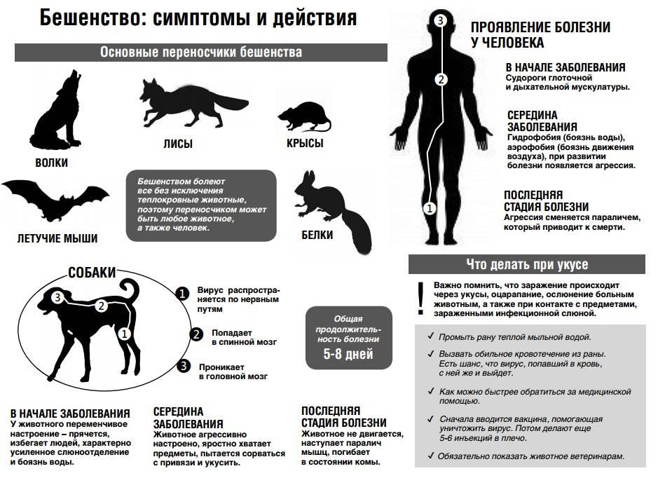 Как передаётся токсоплазмоз: способы заражения и методы предупреждения болезни